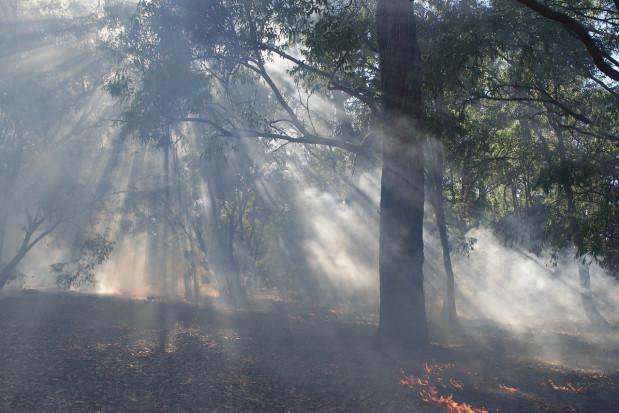 Hiszpania: Pożar strawił 10 tys. ha lasów