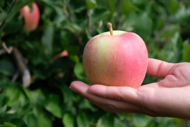 Polski Eko Owoc: Nasze jabłko broni się jakością i smakiem (wywiad)