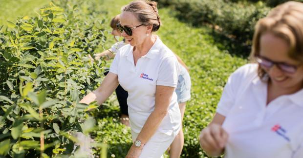 Plantatorzy owoców jagodowych zapraszają medyków na plantacje