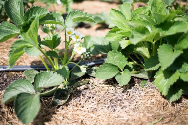 ARiMR: Modernizacja gospodarstw rolnych dłużej – wnioski do 20 września