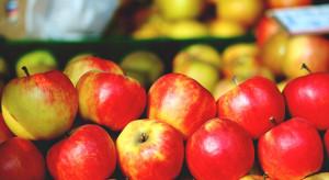 Ceny jabłek w sieciach handlowych mocno spadły