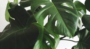 Jakie zasady importu roślin spoza Unii Europejskiej?