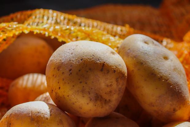 W Polsce uprawia się 140 odmian ziemniaków