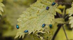 Naukowcy badają naturalny pestycyd. To zapach drapieżnych owadów