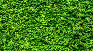 Grupa Azoty posadzi Zielone Ogrodzenie w ramach działań proekologicznych