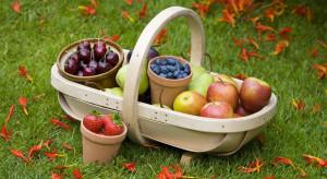 Jabłka, borówki, śliwki - najpopularniejsze owoce sierpnia