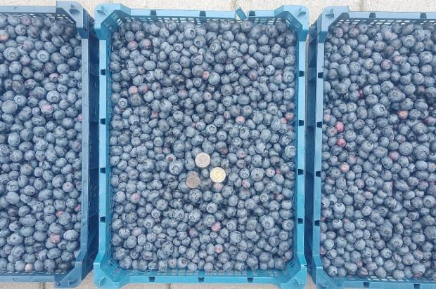 Owoce sezonowe na GieldaRolna.pl - dodaj swoje ogłoszenie!