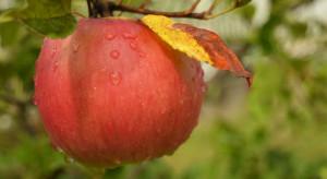 IMGW: sobota i niedziela deszczowa i chłodna