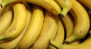 Czarnogóra: Policja przejęła ponad tonę kokainy w transporcie bananów