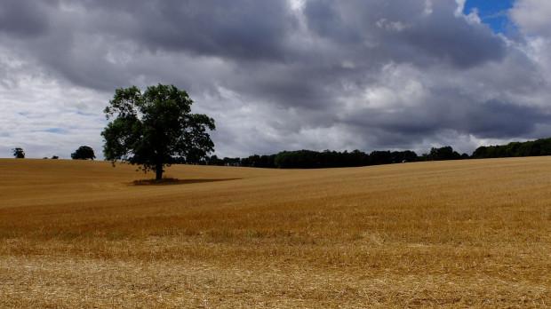 IMGW: w niedzielę przelotne opady i burze na zachodzie