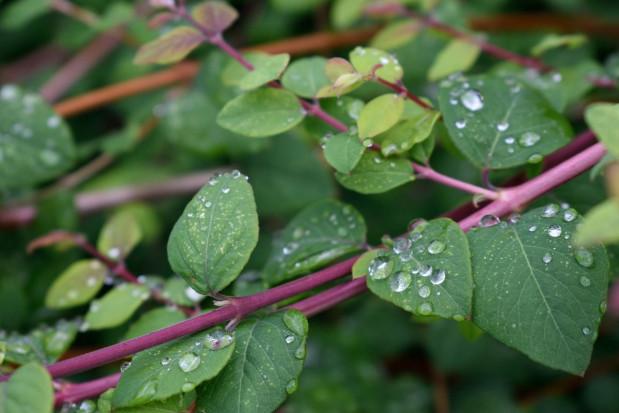 IMGW: deszczowy początek tygodnia; będzie przybywać słońca