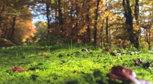 Nowe brzmienie Kodeku dobrych praktyk w leśnictwie