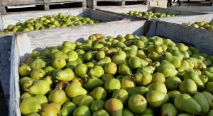 Hiszpania: Wysokie ceny gruszek w 2021 r.