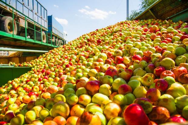 UOKiK zbada poziom cen jabłek w skupach oraz sposób ich ustalania