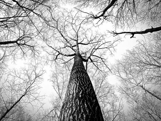 Raport: 1/3 gatunków drzew na świecie zagrożona wyginięciem