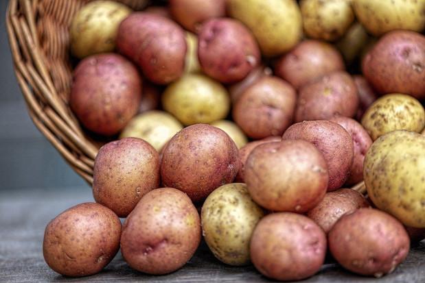 Które ziemniaki najpopularniejsze?
