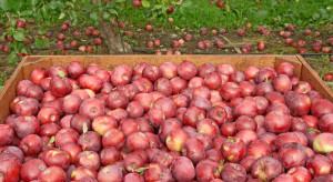 Eksperci: Ceny jabłek przemysłowych powinny wzrosnąć