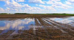 Uprawy warzyw cierpią przez intensywne opady deszczu