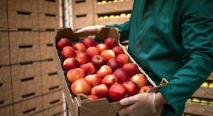 Appolonia chce dostarczać jabłka przez cały rok