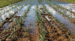 IUNG: Susza ustąpiła, nadmiar wody utrzymuje się w wielu regionach