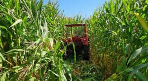 Skradziony ciągnik ukryty na polu kukurydzy