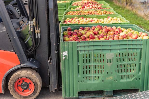 Mazowieckie: Ceny jabłek przemysłowych lecą w dół