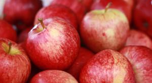 Holenderska firma po raz kolejny kupuje polskie jabłka