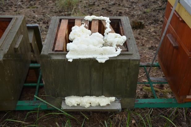Otruto 420 tys. pszczół. Policja szuka sprawców