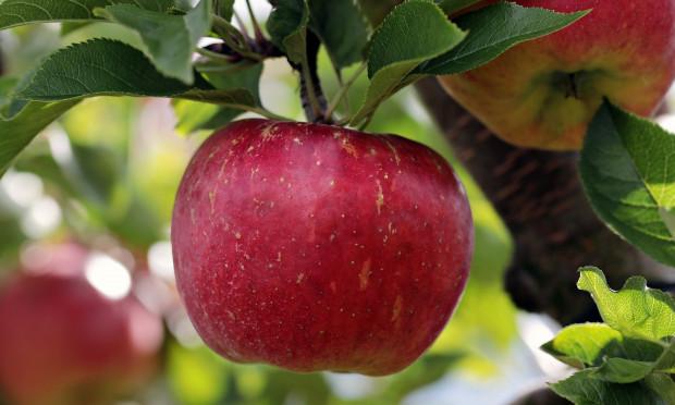 UO: Polscy sadownicy powinni znać wartość swojego produktu