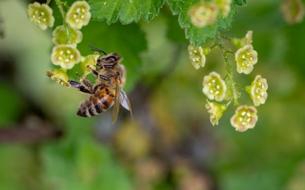 Wielkopolskie: Pszczelarz miał otruć 420 tys. pszczół. Policja szuka jego wspólnika