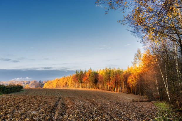 KOWR nadal będzie bezprzetargowo przekazywać grunty pod OZE