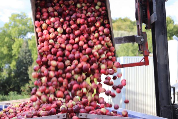 Wzrost cen jabłek przemysłowych to tylko kwestia czasu