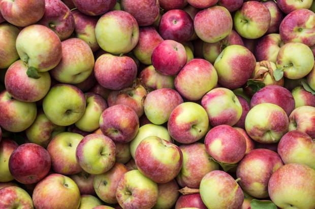 Ceny jabłek na sortowanie: Lobo i Szampion po 0,80 zł/kg