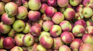 Jabłka na sortowanie: jakie ceny na początku nowego sezonu?