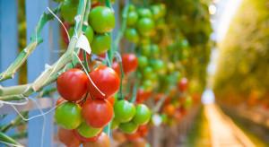 Bayer wprowadzi ekologiczne nasiona warzyw do produkcji szklarniowej