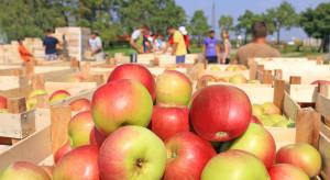PIP: Pracownicy sezonowi mają takie same prawa jak pracownicy lokalni