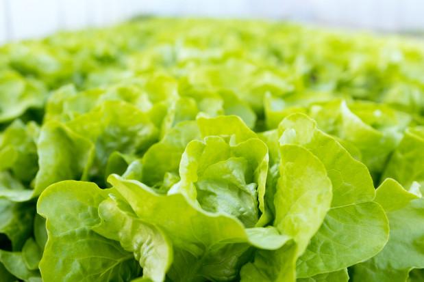 Nowy wirus zagrozi uprawom warzyw w Europie?