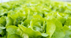 Nowe zagrożenie dla warzyw szklarniowych