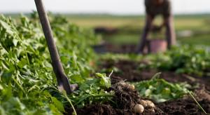 Podlaskie: Pokazy zapomnianych prac w rolnictwie w Ciechanowcu