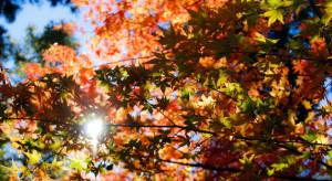 IMGW: poniedziałek ciepły i pogodny, z temperaturą do 23 stopni