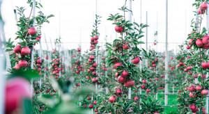 Światowy Dzień Jabłka. Czego życzyć sadownikom?