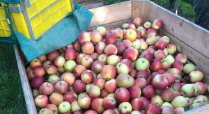 Sadownik z Trzebnicy: Kto sprzeda jabłko poniżej 2 złotych, ten dołoży do interesu