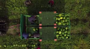Polski rolnik wyhodował i dostarczył 400 ton arbuzów do Biedronki