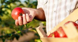 Sandomierz: Apel o pilną interwencję MRiRW w sprawie niskich cen jabłek