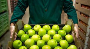 Gór-Sad: nie bawimy się w jabłkowy hazard, sprzedajemy cały rok