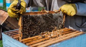 Pszczelarstwo uzyskało 190 mln zł wsparcia w latach 2015-2021