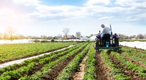 GUS: Produkcja warzyw gruntowych blisko 2% niższa niż w ubiegłym roku