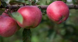 Coraz więcej sadowników decyduje się na ekologiczną produkcję