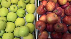 Ceny jabłek na sortowanie coraz niższe. Golden poniżej 1 zł?
