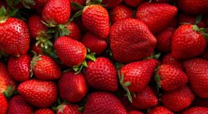 Jakie ceny truskawek odmian powtarzających owocowanie?